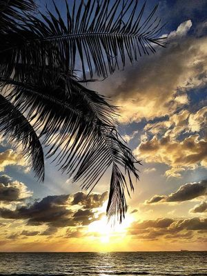 PalmsandClouds_TROP23.jpg