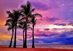 PurpleDawns_TROP25.jpg
