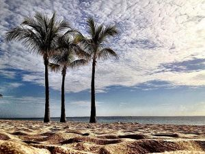 ThoseBeachPalms_TROP18.jpg