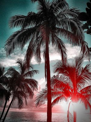 PalmsInPink_TROP3.JPG