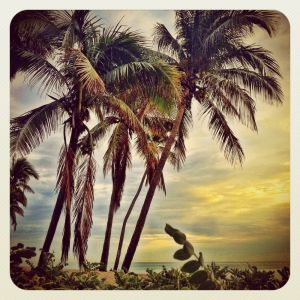TropicalPalmsII_TROP9.JPG