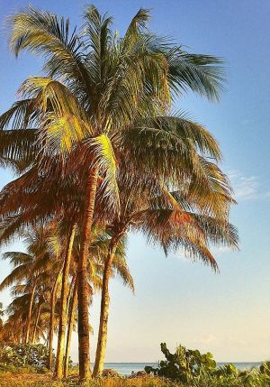 TropicalPalms_TROP6.JPG