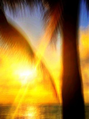 Light and colors and palms_IMP17.JPG