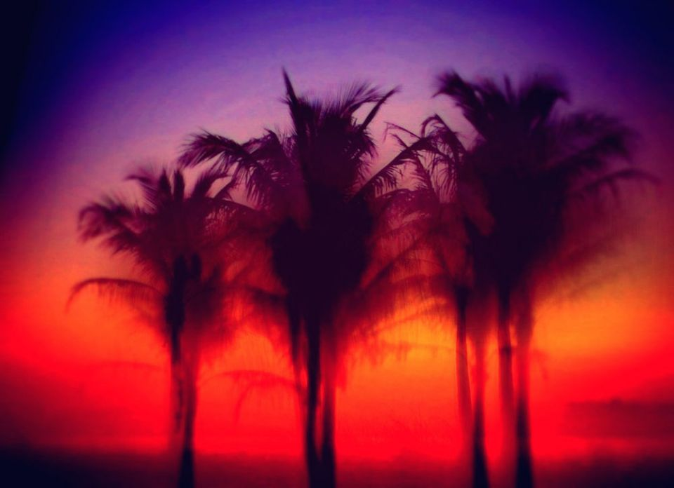 Predawn Palms in red and violet _IMP6.JPG