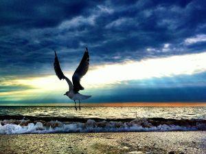 SeagullFBC8.jpg