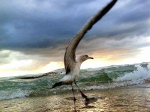 SeagullsDecision_FBC2.JPG