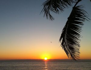 Lazy dawn and palm leaves _ColP6.JPG