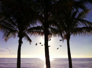 PelicanPalms_ColP10.JPG