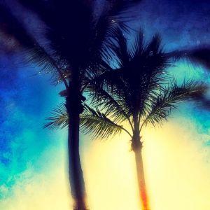 LightThroughTrees_ASC1.JPG