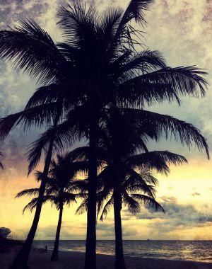 TheBlackTrees_ASC5.JPG