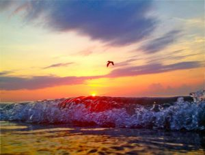 July 1 - Early bird, rolling waves..jpg