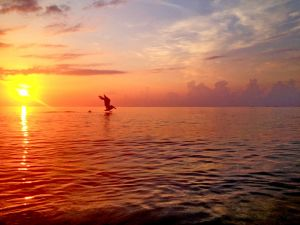 July 1 - Pelican in morning colors..jpg