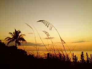July 1 - The grasses before sunrise..jpg