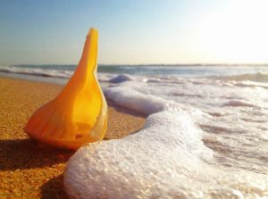 July 1 - The whelk by the ocean..jpg