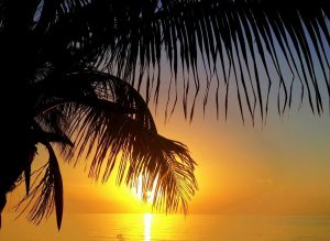 July 2 - Dawn by the palm tree.jpg