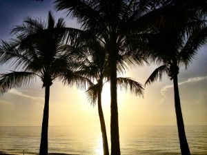 July 2 - Four Bright Palm Trees.jpg