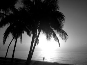 July 2 - THe morning run by the dark palms..jpg